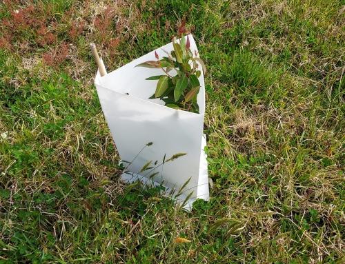 Darlings Planted Trees Bursting to Life